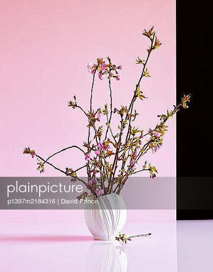 Kirschblütenzweige in einer Vase - p1397m2184316 von David Prince