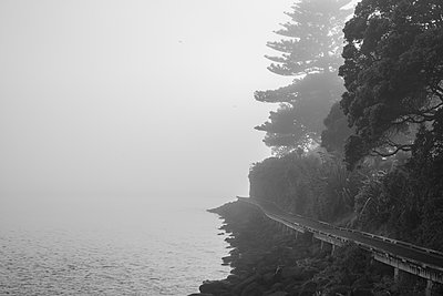 Wooden footpath along estuary in the fog, New Zealand - p1201m2179072 by Paul Abbitt
