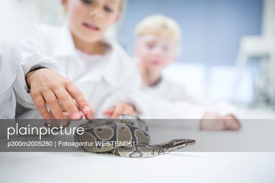 Pupils in science class examining snake - p300m2005280 von Fotoagentur WESTEND61