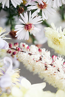 Close-up of white flowers - p312m956982f by Lina Karna Kippel