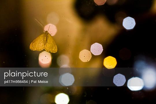 Nachtfalter - p417m956454 von Pat Meise