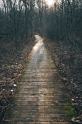 Boardwalk amidst bare trees in forest - p1166m1186527 by Cavan Images