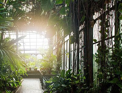 Wintergarten - p1330m1474858 von Caterina Rancho