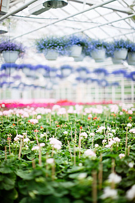 Flowers in greenhouse - p312m1011889f by Lieselotte van der Meijs