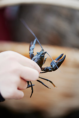 Hand holding crayfish - p312m1229383 by Anna Kern