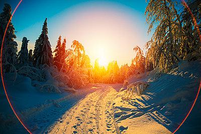 Sun rising over snowy forest - p555m1312187 by Aleksander Rubtsov