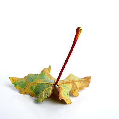 Leaf in autumn - p8130203 by B.Jaubert