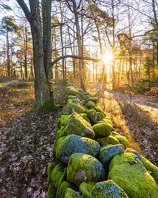 Wall in forest in autumn - p312m1495388 by Mikael Svensson