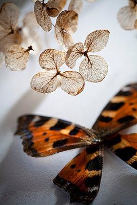 Schmetterling mit Hortensie - p993m698585 von Sara Foerster