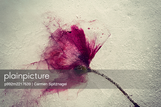 p992m2217639 by Carmen Spitznagel
