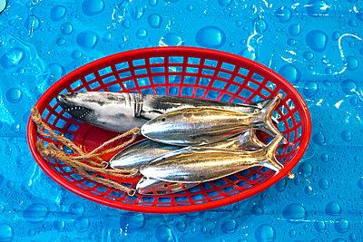 Artifical fish in a basket - p1484m2149740 by Céline Nieszawer