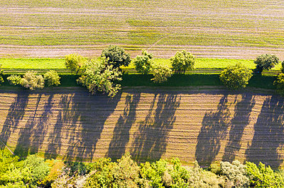 Bäume auf Damm zwischen Feldern bei Schäftlarn, Luftbild, Oberbayern, Bayern, Deutschland - p300m2144692 von Martin Siepmann