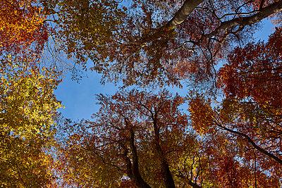 Herbst 3 - p587m1466528 von Spitta + Hellwig
