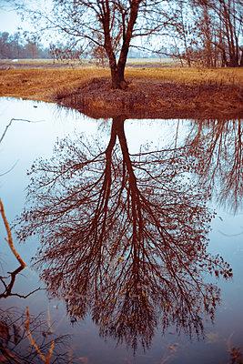 Reflection tree - p1402m1525645 by Jerome Paressant