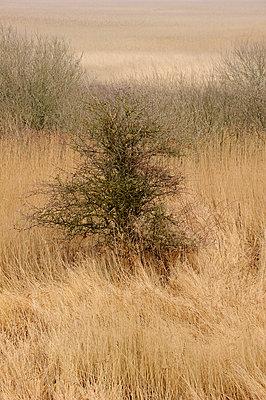 Trocken - p949m902575 von Frauke Schumann