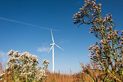 Windrad auf dem Land - p1079m1137124 von Ulrich Mertens