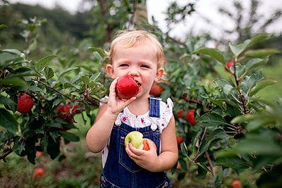 Portrait of cute girl eating apple while standing against fruit trees - p1166m2040028 by Cavan Images