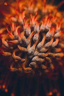 Exotische Blume - p1628m2230113 von Lorraine Fitch