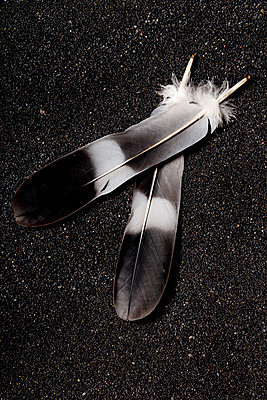 Feather - p451m971142 by Anja Weber-Decker