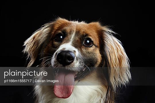 p1166m1555717 von Cavan Images
