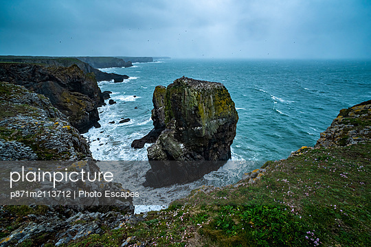 Elegug Stacks, occupied by a colony of Guillemots, Pembrokeshire Coast National Park, Wales, United Kingdom - p871m2113712 by Photo Escapes