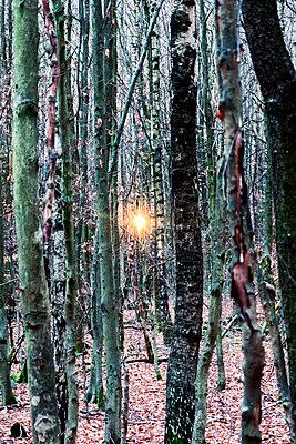 Sonnenuntergang im Wald - p879m1538000 von nico