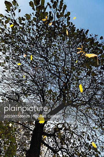 Silhouette eines Baums im Wasser - p223m1586629 von Thomas Callsen
