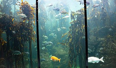 Two Oceans Aquarium, biodiversity - p1640m2246219 by Holly & John