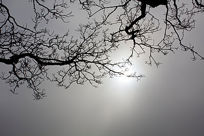 Branches against a dark sky - p1072m1163367 by Gail Symes