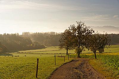 Germany, Bavaria, Upper Bavaria, Icking, landscape at morning light - p300m1568235 by Hans Lippert