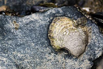 Stein am Strand - p162m794006 von Beate Bussenius
