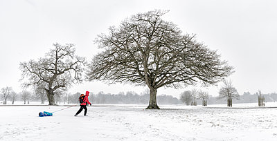 UK, woman pulling sled through snow-covered winter landscape - p300m2028729 von Alun Richardson