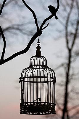 Free bird - p7390374 by Baertels