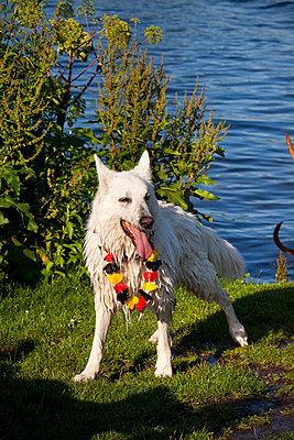 Nasser Hund - p1271m1159843 von Maurice Kohl