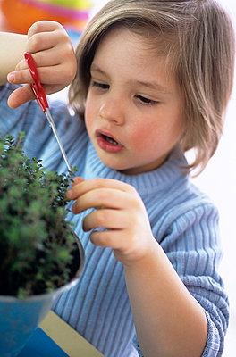 Young boy cutting herbs in kitchen - p3001525f by Bärbel Büchner