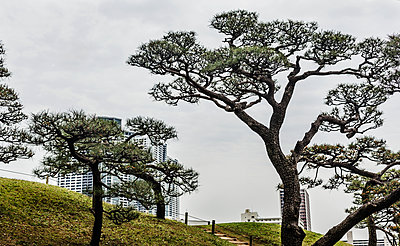 Trees, skyscrapers on background - p312m2091595 by Pernille Tofte