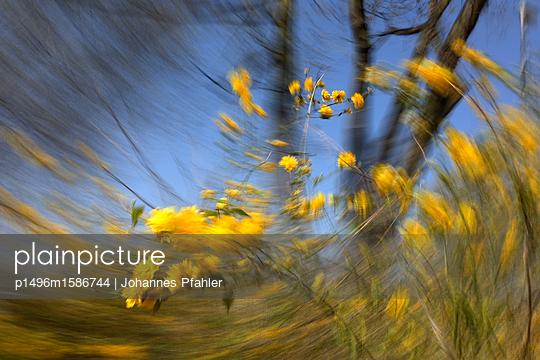 Gelbe Blüte - p1496m1586744 von Johannes Pfahler