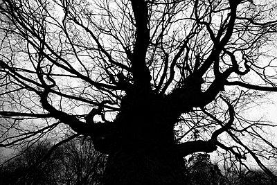 Alter Baum - p1057m900436 von Stephen Shepherd