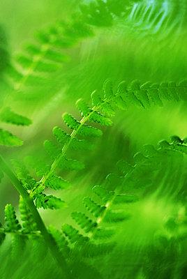 Fern - p4261741f by HÂkan Jansson