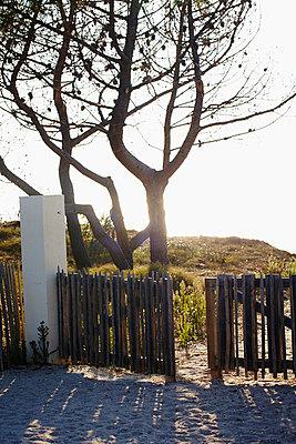 Beach path - p464m1020164 by Elektrons 08
