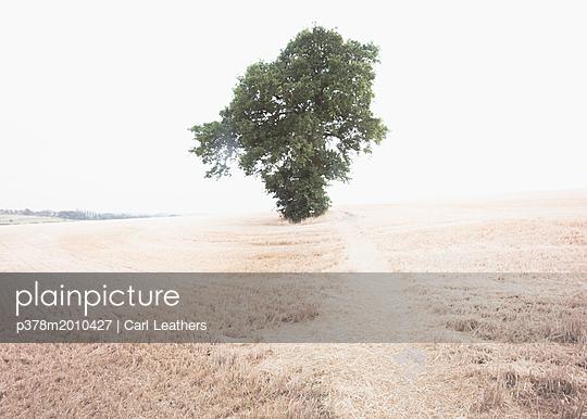 p378m2010427 von Carl Leathers