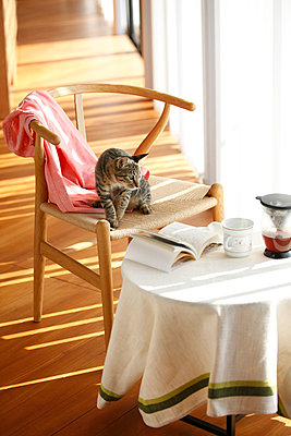 Cat Sitting On Chair Alongside Round Table - p307m700482f by Imaggio