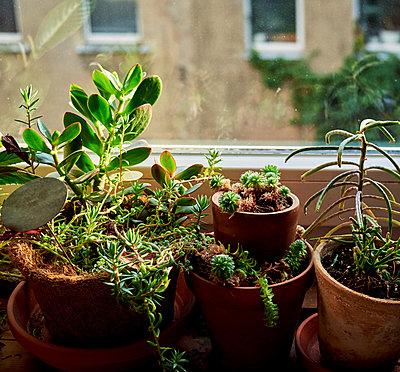 Grüne Fensterbank - p989m2159092 von Gine Seitz