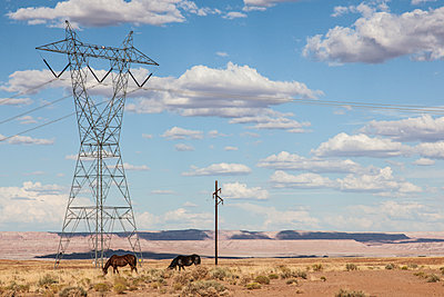 Horses Grazing By Electricity Pylon - p1291m1548114 by Marcus Bastel
