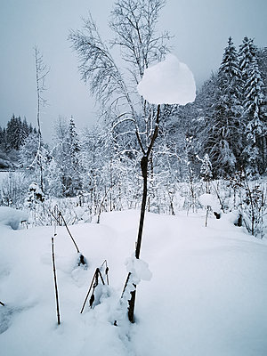 France, Snowy landscape - p945m2231964 by aurelia frey