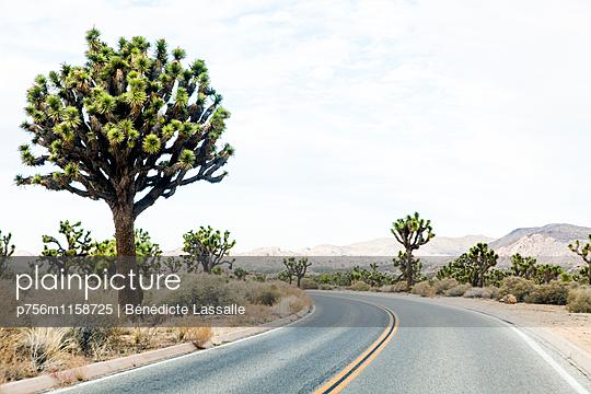 Palm Springs - p756m1158725 von Bénédicte Lassalle