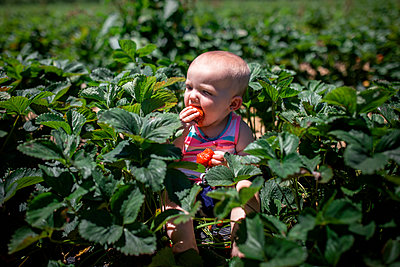 High angle view of baby girl eating strawberries while sitting in farm during summer - p1166m1485592 by Cavan Images