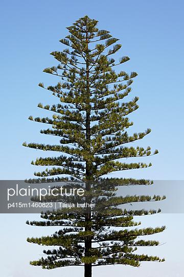 Baum - p415m1460823 von Tanja Luther