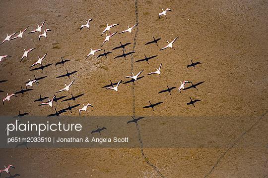 p651m2033510 von Jonathan & Angela Scott