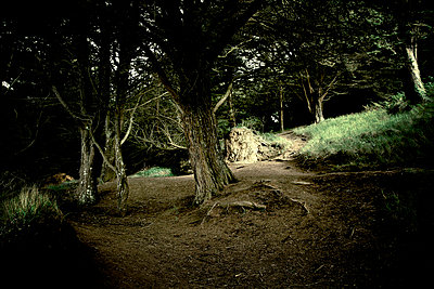 Hike path in the forest - p567m667431 by Benjamin Colombel